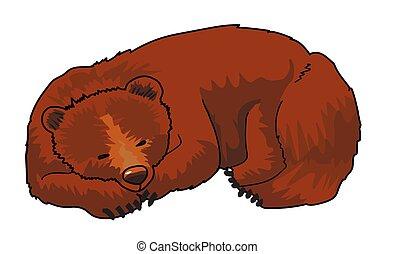 bear1.eps - Sleeping brown bear on a white background.