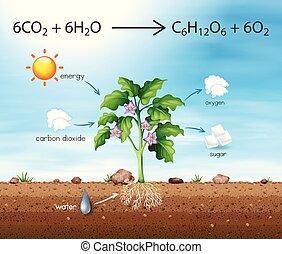 bearbeta, producera, träd, syre