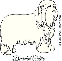 Bearded collie coloring - Bearded collie dog coloring vector...