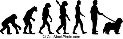 Bearded Collie evolution - Bearded Collie dog evolution...