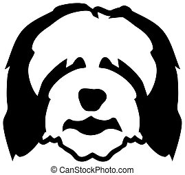 Bearded Collie head black and white