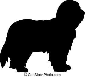 Bearded Collie silhouette black - Bearded Collie dog...