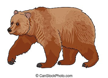 BEAR.eps - Going big brown bear on a white background.