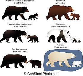 Bears and bear-cubs - Collection of different species of...