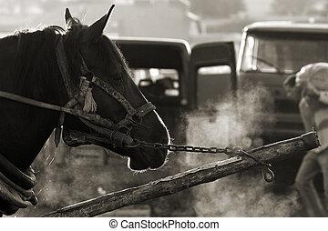 Horse. Picture taken in village market in Poland.