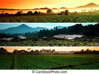 Beatiful Farm landscape collage