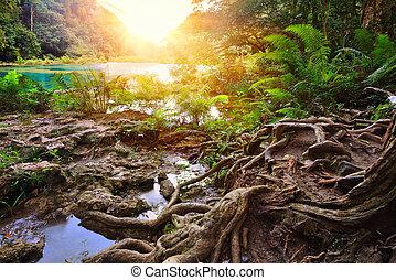 beatiful, kaskaden, nationalpark, in, guatemala, semuc, champey, an, sunset.