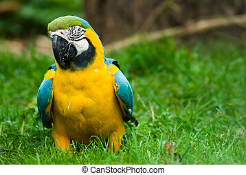 beatiful parot in the grass