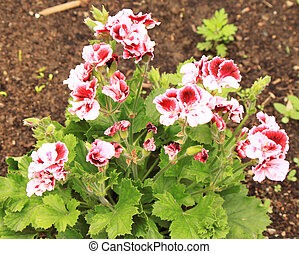 Beatiful red flowers on a flower bed