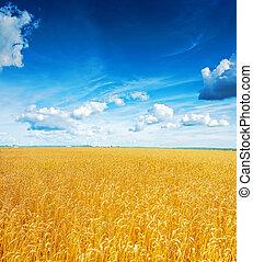beatiful, vista, ligado, campo, de, trigo, azul, céu nublado