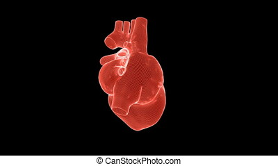 Beating human heart wireframe rotating against black,...