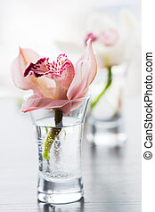 orchids - beaty orchids in small glass vases