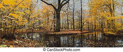 beau, énorme, doré, feuilles, entouré, chêne, lac, forêt automne, jour