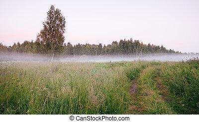 beau, épais, brouillard, levers de soleil, automne, automne, paysage, sur, champs, à, cimes arbre, visible, par, brouillard