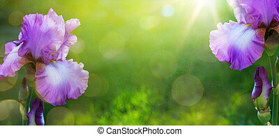 beau, été, art, jardin, iris, printemps, fond, fleurs, ou