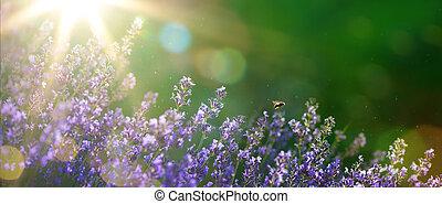 beau, été, art, jardin, printemps, lavande, fleurs, ou