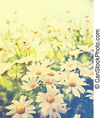 beau, été, art, jardin, printemps, pâquerette, fleurs, ou