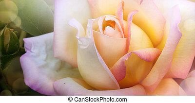 beau, été, art, jardin, rose, printemps, arrière-plan;, ou