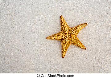 beau, été, art, mer, fetes, fond