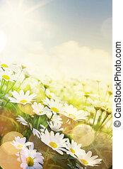 beau, été, fleurs, art, jardin
