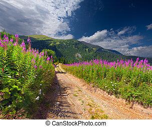 beau, été, montagnes, fleurs roses, paysage