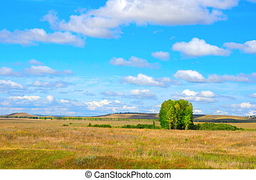 beau, été, paysage