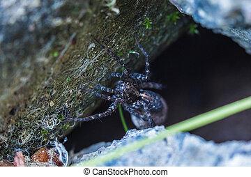 beau, été, sien, coup, macro, ensoleillé, araignés, attente, temps, victime, printemps, trou, ou