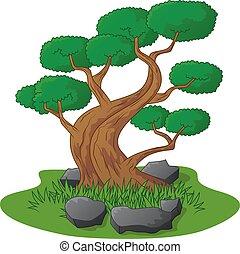 beau, arbre bonzaies, isolé