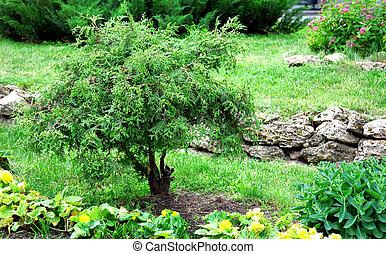 Beau balinais chat jardin t photos de stock for Beaux arbres de jardin