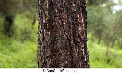 beau, arbre, regarder, appareil photo, girl