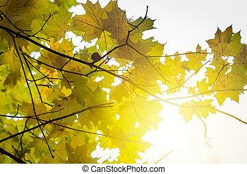 beau, arbres automne, jour ensoleillé