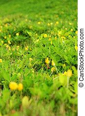 beau, arbres., -, herbe verte, paysage