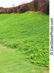 beau, Arbres,  -, vert, herbe, paysage