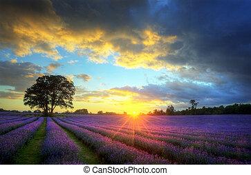 beau, atmosphérique, mûre, vibrant, campagne, champs, image, ciel, lavande, abrutissant, coucher soleil, anglaise, nuages, sur, paysage