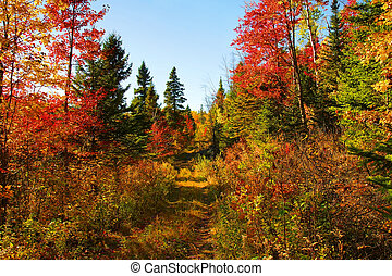 beau, automne, bois, jour