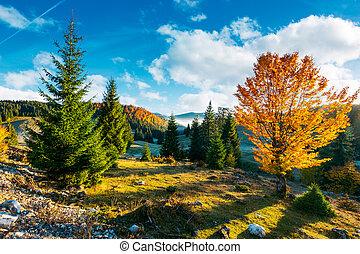 beau, automne, campagne, levers de soleil