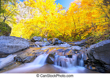 beau, automne, chute eau, saison