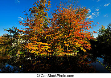beau, automne, couleurs