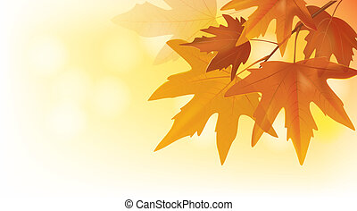 beau, automne, feuilles, Érable