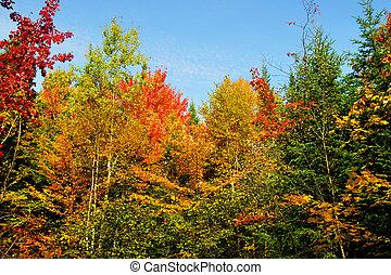 beau, automne, forêt, paysage