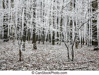 beau, automne, neige, arbres, forêt