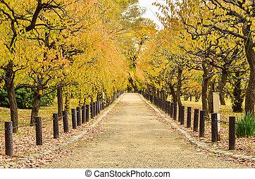 beau, automne, parc, chemin