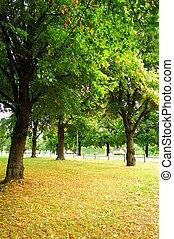 beau, automne, parc, jour