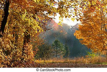 beau, automne, scène