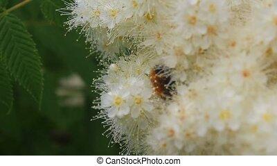 beau, away., mouches, fleur, montées, bourdon, luxuriant, ...