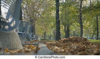 beau, bancs, parc, feuilles, ensoleillé, arbres, automne, tomber, jour