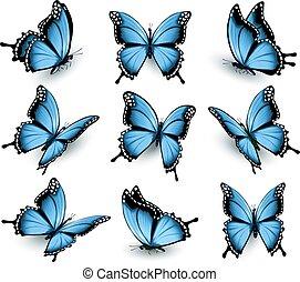 beau, bleu, ensemble, vector., butterflies.