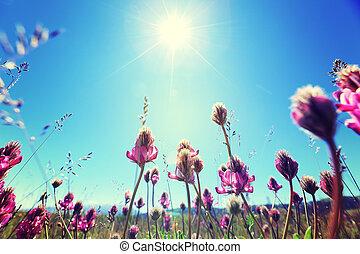 beau, bleu fleurit, ciel, sous