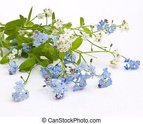 beau, bleu fleurit