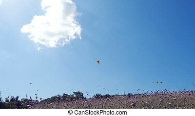 beau, bleu, lent, sky., lotissements, butterflies., sur, voler, contre, mouvement, champ, papillons, appareil photo, mouvements